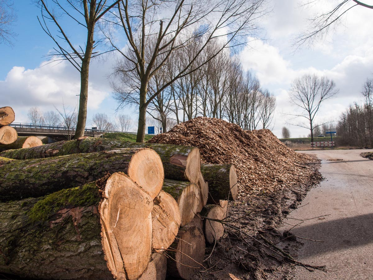 Bomenkap A6 Almere
